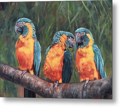 Metal Print featuring the painting Macaws by David Stribbling