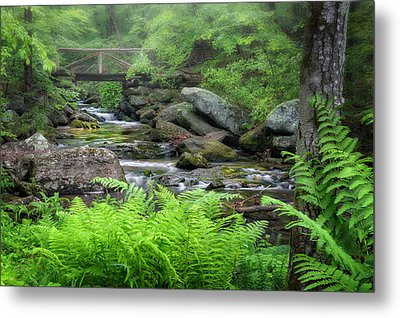 Macedonia Brook State Park Connecticut Metal Print by Bill Wakeley