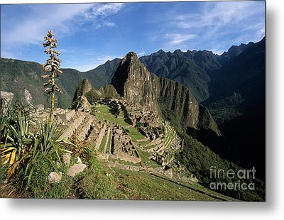 Machu Picchu And Bromeliad Metal Print by James Brunker