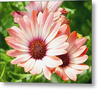Macro Pink Cinnamon Tradewind Flower In The Garden Metal Print