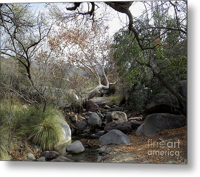 Madera Creek Metal Print by Feva Fotos
