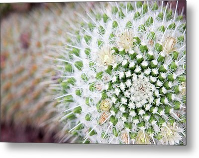 Madrid Botanical Garden 1 Metal Print