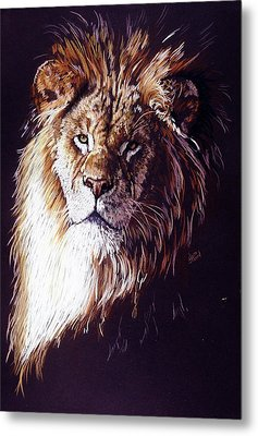 Maestro Metal Print by Barbara Keith