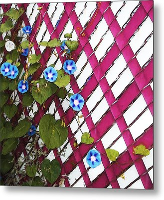 Metal Print featuring the photograph Magenta Chain-link by Shawna Rowe