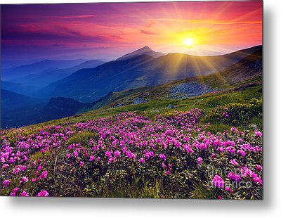 Magic Pink Rhododendron Flowers On Summer Mountain Metal Print by Caio Caldas