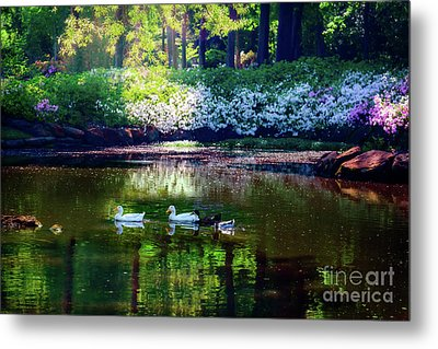 Magical Beauty At The Azalea Pond Metal Print by Tamyra Ayles