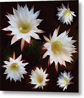Metal Print featuring the photograph Magical Flower by Gina Dsgn