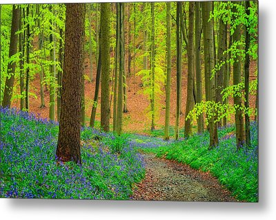 Metal Print featuring the photograph Magical Forest by Maciej Markiewicz