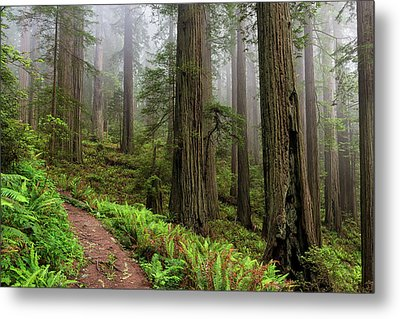 Magical Forest Metal Print