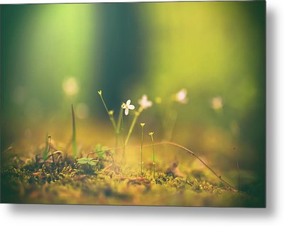 Metal Print featuring the photograph Magical Moment by Shane Holsclaw