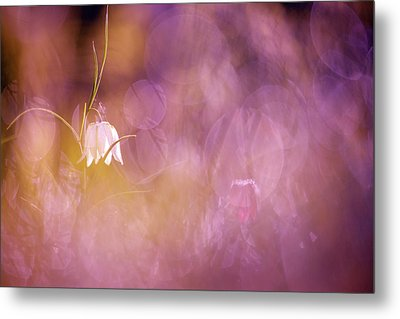 Magical Mood Metal Print