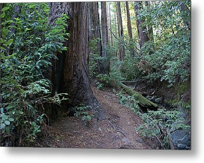 Magical Path Through The Redwoods On Mount Tamalpais Metal Print by Ben Upham III