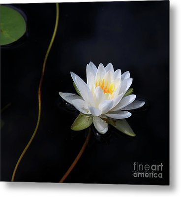 Metal Print featuring the photograph Magical Water Lily by Michelle Wiarda