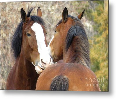 Magnificant Horses -the Clydesdales-10 Metal Print