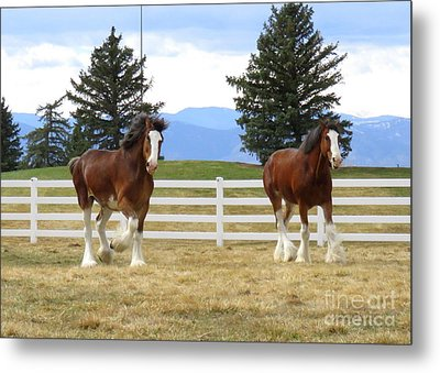 Magnificant Horses - The Clydesdales -19 Metal Print