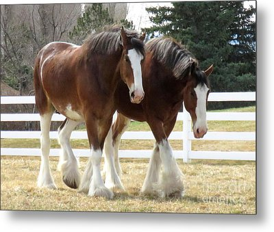 Magnificant Horses - The Clydesdales -9 Metal Print by Diane M Dittus