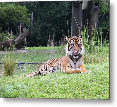 Metal Print featuring the photograph Magnificent Creature by Vadim Levin