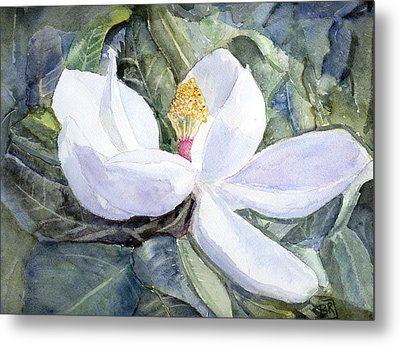 Magnolia Blossom Metal Print by Barry Jones