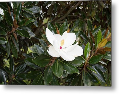 Metal Print featuring the photograph Magnolia Blossom by Linda Geiger