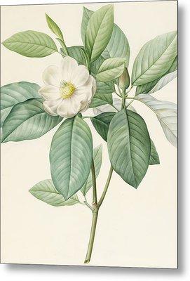 Magnolia Glauca Metal Print by Pierre Joseph Redoute