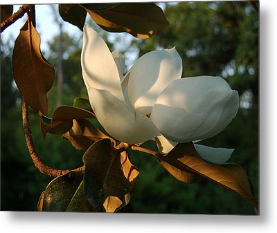 Magnolia Metal Print by Heather S Huston