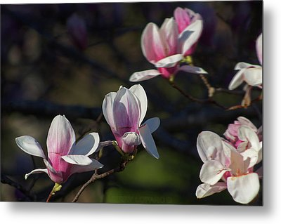 Magnolia Metal Print by Jerry LoFaro