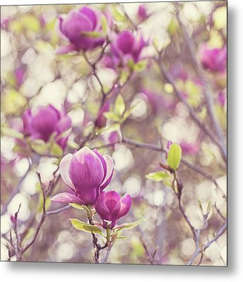 Metal Print featuring the photograph Magnolia by Melanie Alexandra Price
