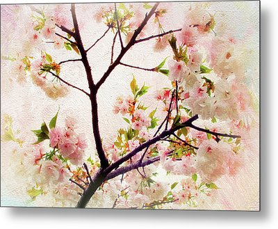 Metal Print featuring the photograph Asian Cherry Blossoms by Jessica Jenney