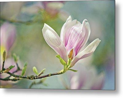 Magnolia Metal Print by Nailia Schwarz