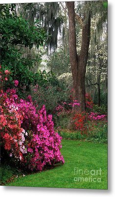 Metal Print featuring the photograph Magnolia Plantation - Fs000148a by Daniel Dempster