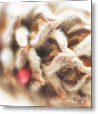 Magnolia Seedpod Metal Print