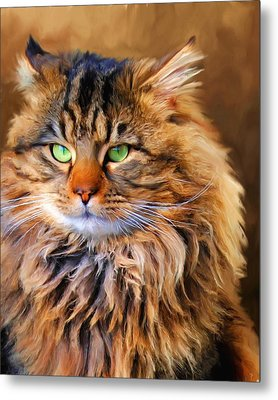 Maine Coon Cat Metal Print by Jai Johnson