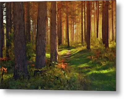 Maine Forest Sunset Metal Print by David Dehner