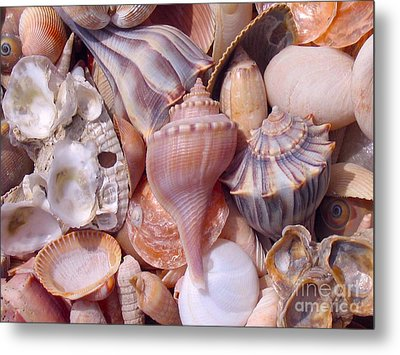 Maine Harvest Metal Print by Christine Dion
