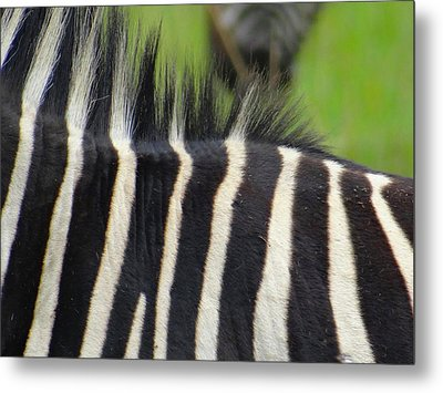 Mainly Mane Metal Print by Exploramum Exploramum