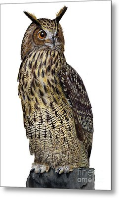 Metal Print featuring the painting Majestic Eurasian Northern Eagle Owl Bubo Bubo - Hibou Grand-duc - Buho Real - Nationalpark Eifel by Urft Valley Art