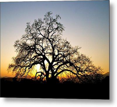 Majestic Oak Tree Sunset Metal Print