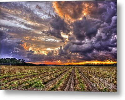 Metal Print featuring the photograph Majestic Peanut Harvest Sunset Art by Reid Callaway