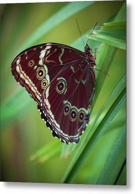 Majesty Of Nature Metal Print by Karen Wiles