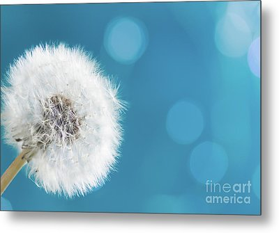 Make A Wish  Metal Print by Anastasy Yarmolovich