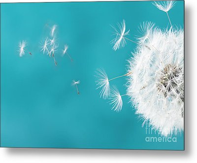 Make A Wish II Metal Print by Anastasy Yarmolovich