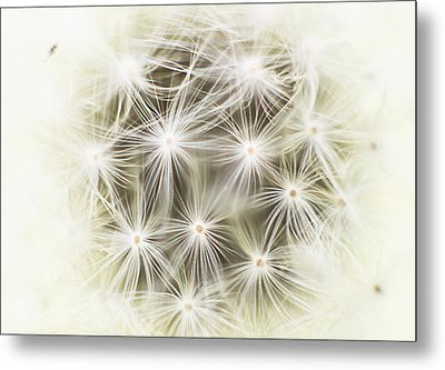 Make A Wish Metal Print by Marlo Horne