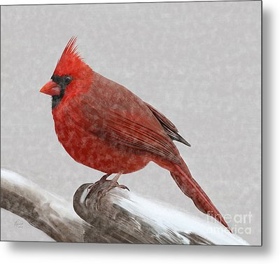 Male Cardinal In Snow Metal Print by Rand Herron