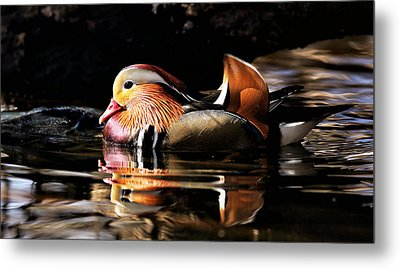 Male Mandarin Duck 2 Metal Print by Grant Glendinning