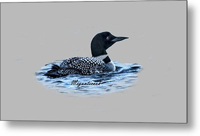 Male Mating Common Loon Metal Print