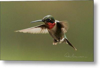 Male Ruby-throated Hummingbird 6794 Metal Print