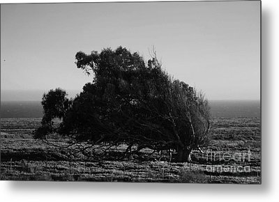 Metal Print featuring the photograph Malformed Treeline by Clayton Bruster
