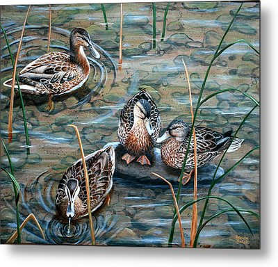 Mallards Metal Print by Brenda Baker
