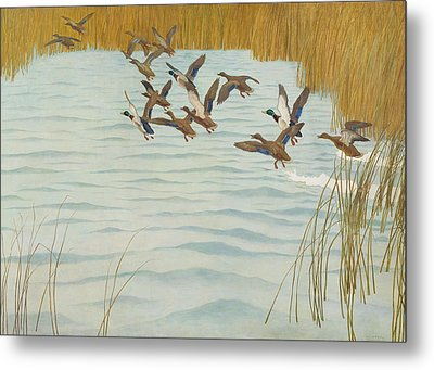 Mallards In Autumn Metal Print