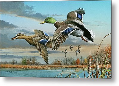 Mallards In Flight Metal Print